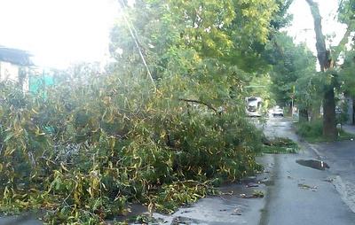 Непогода в Ростове-на-Дону повалила более 25 деревьев