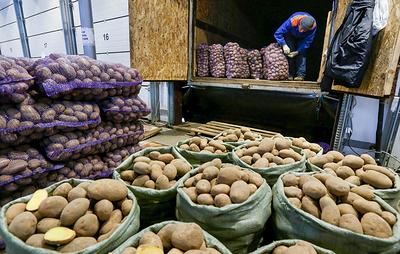 Россияне за 40 лет снизили потребление картофеля в два раза