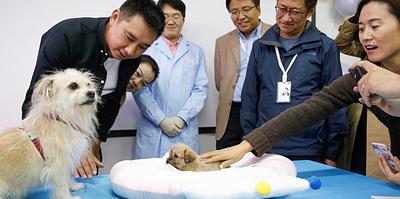 """""""Особенно сложно создавать собак"""". Как в Китае развивается индустрия клонирования"""