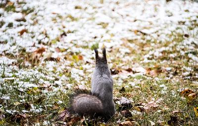 Синоптики прогнозируют заморозки в Уральском федеральном округе в середине октября