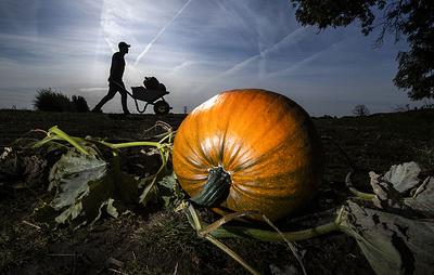 Не только к Хэллоуину. Что приготовить из тыквы — универсального, но недооцененного овоща