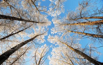 Площадь лесовосстановления в Приамурье составила 29 тыс. га