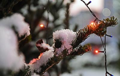 Власти Кургана раздадут новогодние ели семьям, находящимся в трудной жизненной ситуации