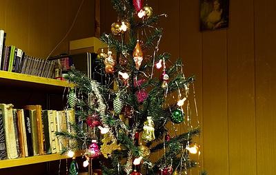 Самые северные в России новогодние елки установили на Земле Франца-Иосифа