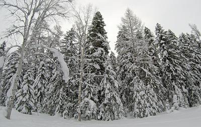 ФРДВ вложит в создание системы с данными о лесной отрасли ДФО около 300 млн рублей