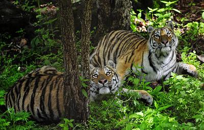 Крупнейший зоопарк Приморья подготовили к изоляции