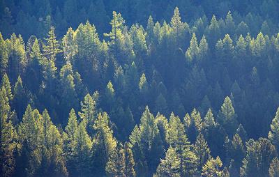 В Бурятии потушили все лесные пожары