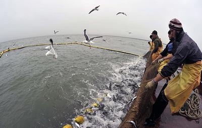 В Сахалинской области в 2020 году намерены добыть более 91 тыс. тонн тихоокеанских лососей