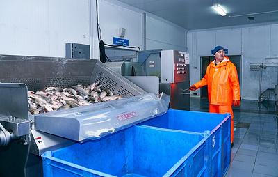 Первой страной для экспорта ямальской рыбной продукции станет Белоруссия