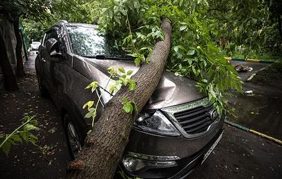 В Москве из-за непогоды повалено более десяти деревьев