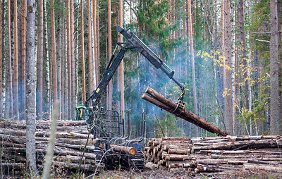 Власти Камчатки предложили Минприроды согласовывать с регионами разрешения на рубку лесов