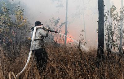 Площадь ландшафтных пожаров под Воронежем достигла почти 100 га