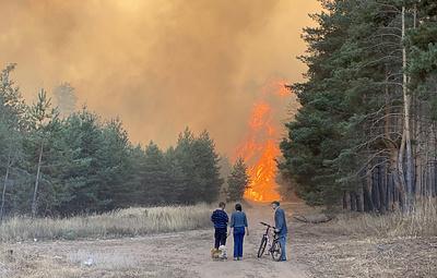 Причиной ландшафтных и лесных пожаров в Воронежской области могли стать поджоги