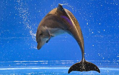 """""""Известия"""": в Госдуме предложили запретить вылов морских млекопитающих"""