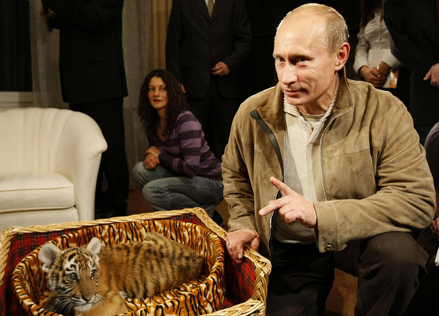 In 2008, Vladimir Putin was given a two-month-old tiger cub which was then handed over to a zoo