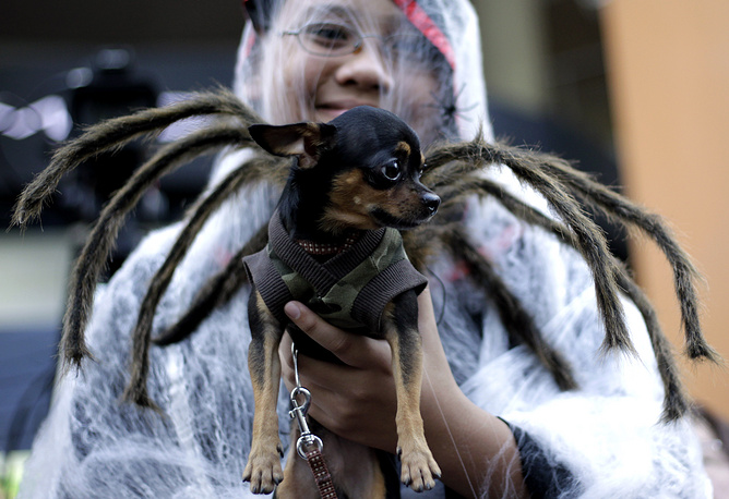 Filipino children and their pets came dressed in various costumes to mark the Halloween weekend before the country's Catholic population is set to mark All Saints Day on 01 November and All Souls Day on 02 November in cemeteries nationwide
