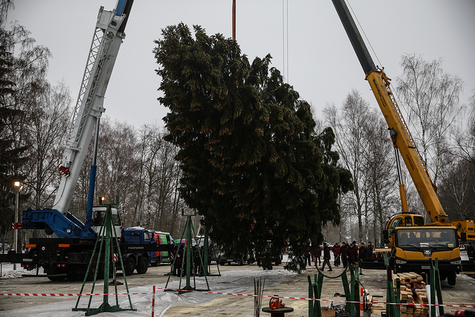 The fir tree which will stand in the Moscow Kremlin's Cathedral Square this New Year and Christmas was chopped down in the woods of Ruzsky District, Moscow Region. It's 31 meters high and 72 cm in diameter