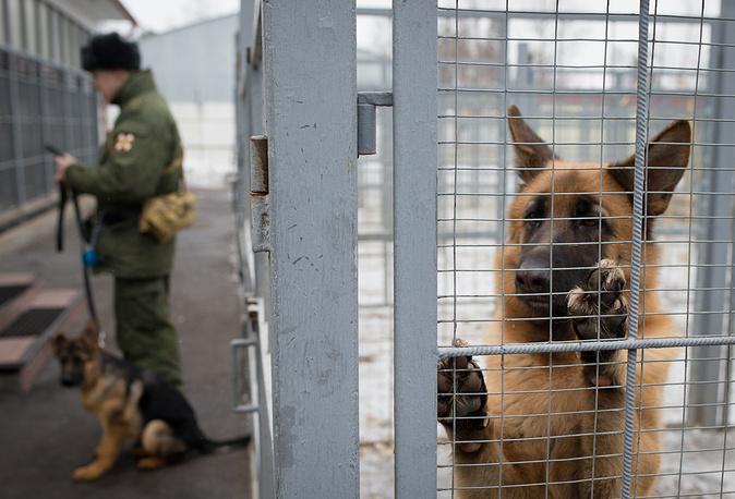 German shepherd in a dog kennel