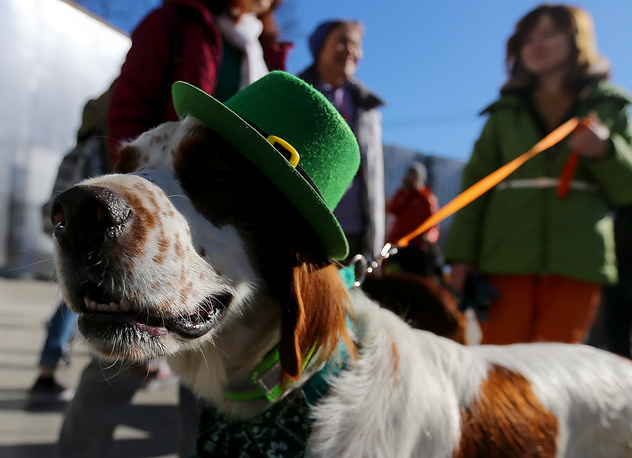 A dog wearing a green hat during a Saint Patrick's Day parade in Moscow