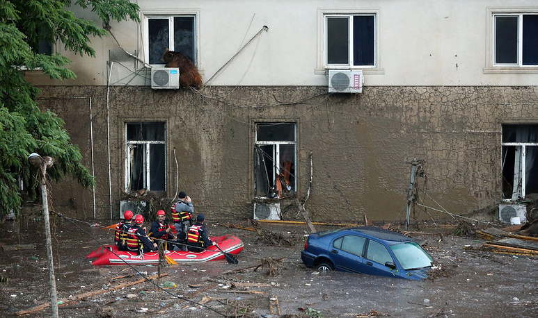A runaway bear sitting on the window of the second floor of a building on the flooded street in Tbilisi