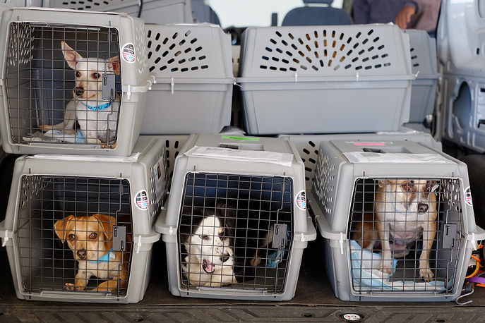 International Animal Rights Day is marked on December 10. Photo: dogs from animal shelters