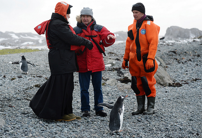 Ardley Island is identified as an Important Bird Area as it supports a breeding colony of gentoo penguins