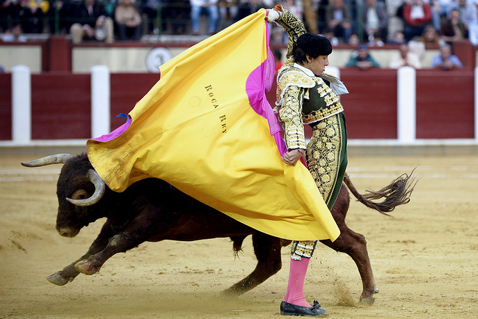 Bullfighter Andres Roca fights his second bull during the San Pedro Regalado bullfighting fair in Valladolid, Spain, May 14