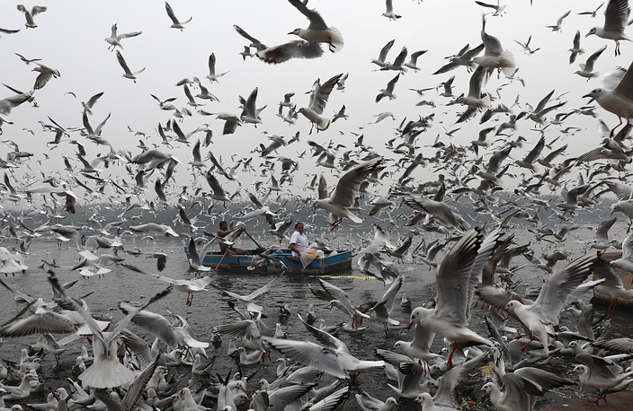 Indian people in a boat feed the migratory birds on a smoggy morning on the banks of the Yamuna river in New Delhi, India, December 5