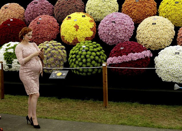 A visitor walks past the National Chrysanthemum Society display at the RHS Chelsea Flower Show