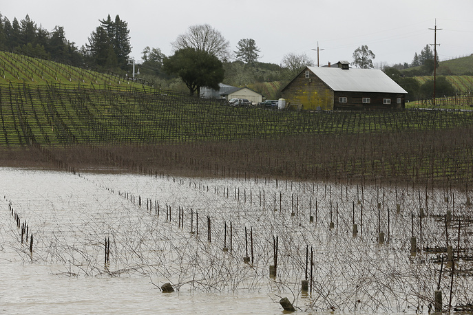 A vineyard along River Road is flooded near Forestville
