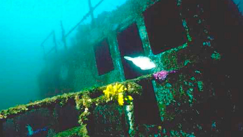 Sunken Rainbow Warrior became training grounds for divers, 2002