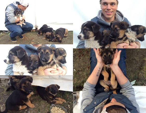 Пожалуй, никого не оставила равнодушным история американского фристайлиста Гаса Кенуорти, приютившего семью с щенками, которых спортсмен нашел в горном кластере возле олимпийского медиацентра.  Кенуорти каждый день навещал собачье семейство. В итоге вместе с обладателем серебра Сочи-2014 в США отправятся пять бездомных собак