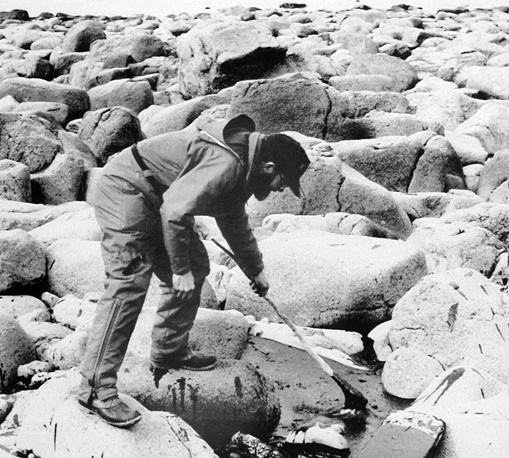 В результате катастрофы в море вылилось около 260 тыс. баррелей нефти, образовав пятно в 28 тыс. кв. км. На фото: ликвидация последствий аварии на береговой линии полуострова Аляска, апрель 1989 г.