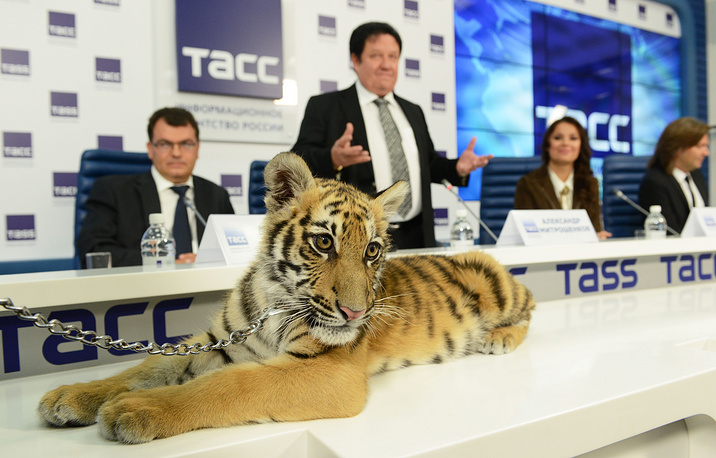 Амурский тигренок по имени Мур на пресс-конференции