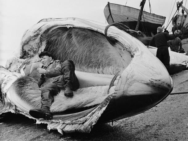 Китобойный промысел. Приморский край, 1960 год