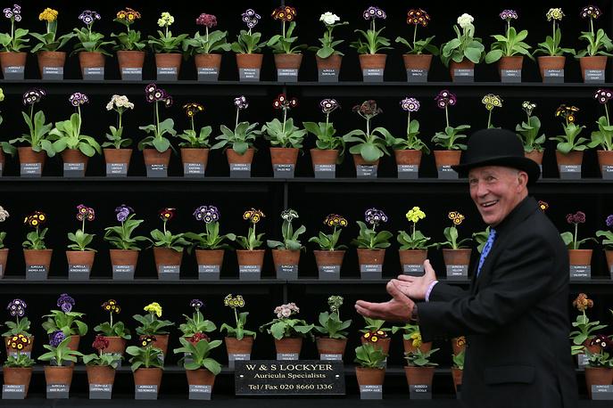 Селекционер на выставке цветов в Челси