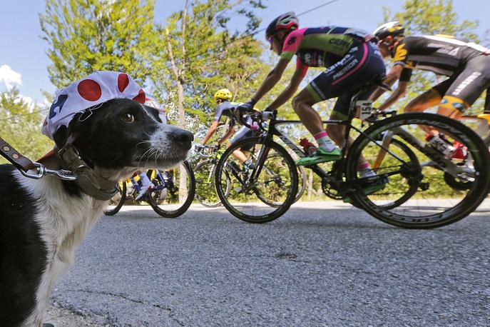 """Гонщики во время 17-го этапа """"Тур де Франс"""". Франция, 22 июля"""