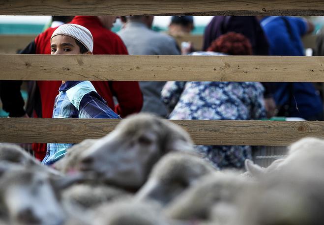 Жертвенные бараны в день праздника жертвоприношения Курбан-байрам в Казани