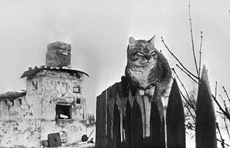 Ленинградская область. Кошка на пепелище в деревне Большое Заречье. 1944 г.