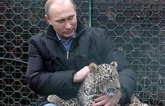 Президент РФ Владимир Путин c детенышем леопарда по кличке Гром