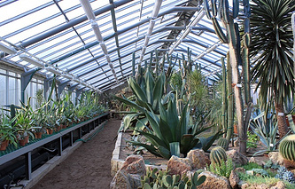 В пальмовой оранжерее Ботанического сада