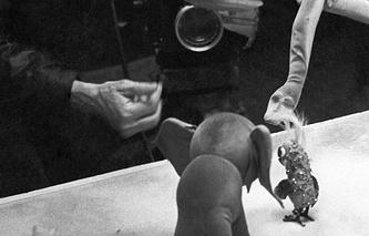 """Съемки мультфильма """"Как лечить Удава"""", 1976 год"""