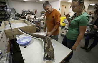 Работа ученых-палеонтологов