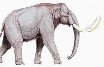 Трогонтериевый слон