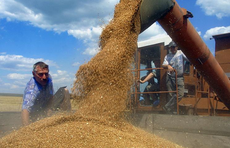 Harvesting in Rostov Region