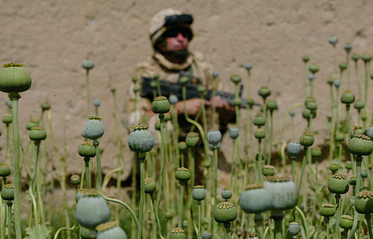 A British military patrols near a poppy field in Afghanistan (archive)