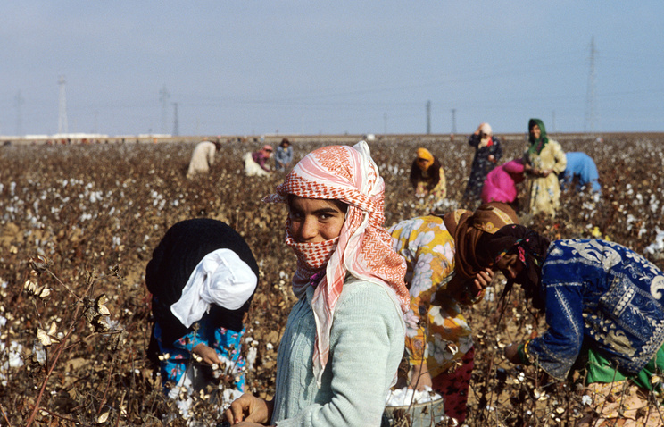Cotton crop in Syria, 1984 (archive)