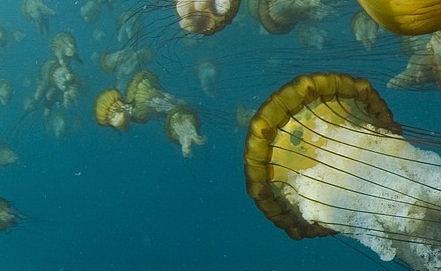"""""""Oceans"""" movie still. ITAR-TASS/ Filmpoisk.ru"""