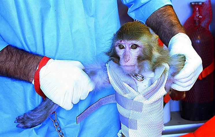 Первый запуск в космическое пространство обезьяны в Иране 28 января 2013 года