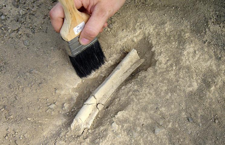 Археологические раскопки в Кении